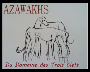 azawakh-d.t.c.
